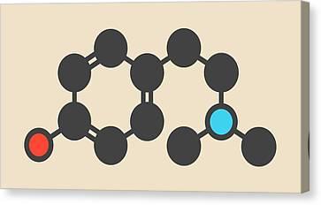 Hordenine Stimulant Molecule Canvas Print by Molekuul