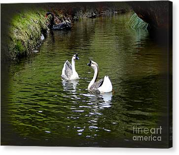 Horn Billed Geese Canvas Print by Al Bourassa