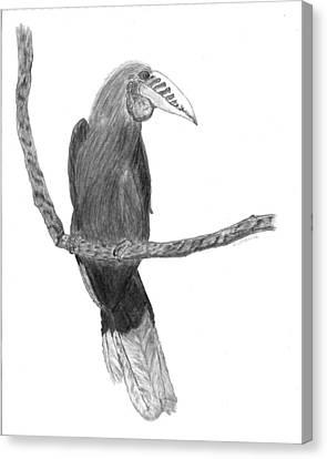 Hornbill Harry Canvas Print by D Sharelle