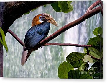 Canvas Print featuring the photograph Hornbill In Paradise by Adam Olsen