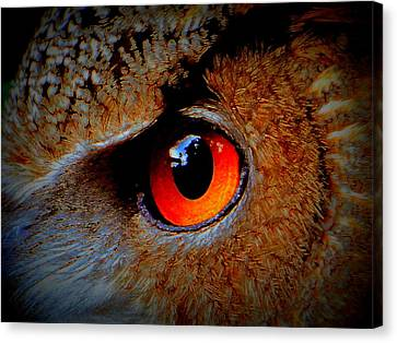 Horned Owl Eye Canvas Print by David Mckinney