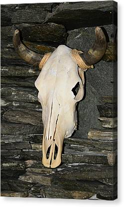 Horned Skull Canvas Print by T C Brown