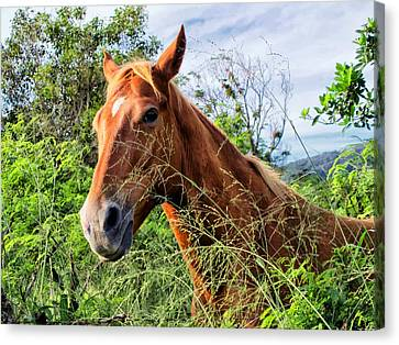 Canvas Print featuring the photograph Horse 1 by Dawn Eshelman