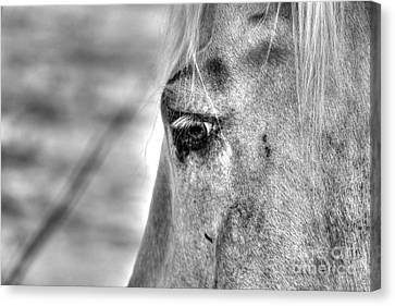 Horse 1 Canvas Print by Jimmy Ostgard