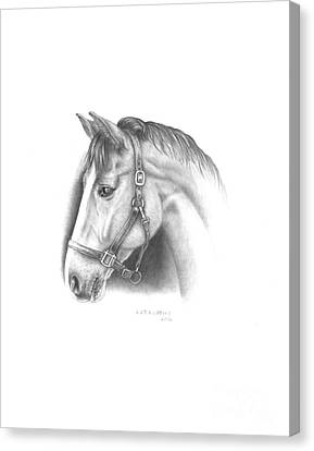 Horse-2 Canvas Print by Lee Updike