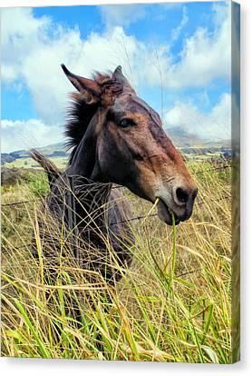Canvas Print featuring the photograph Horse 6 by Dawn Eshelman