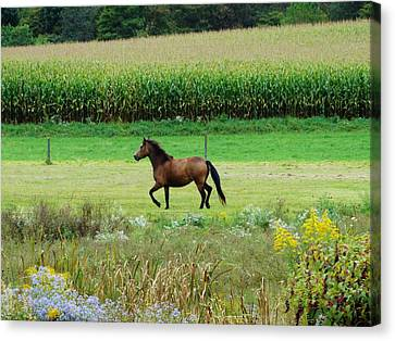 Cornfield Canvas Print - Horse Amidst Many Colors by Sherry Brant