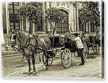 Horse And Buggy In Sevilla - Spain Canvas Print by Madeline Ellis