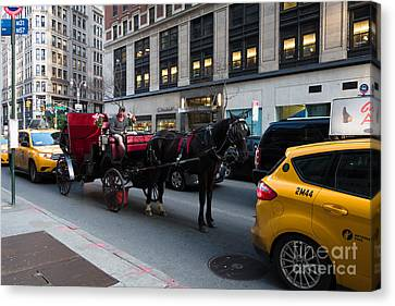 Horse And Carriage Nyc Canvas Print by Amy Cicconi