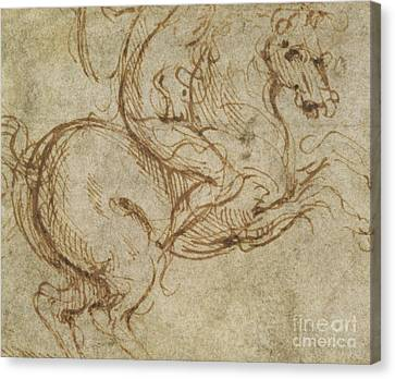 Horse And Cavalier Canvas Print by Leonardo da Vinci