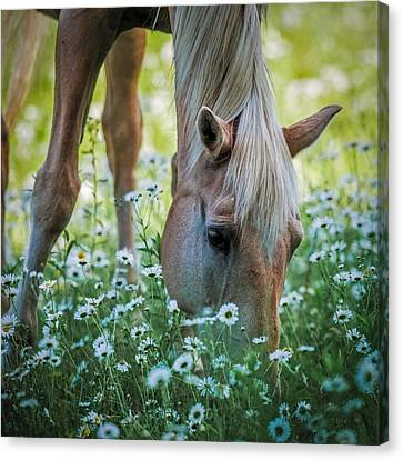 Horse And Daisies Canvas Print