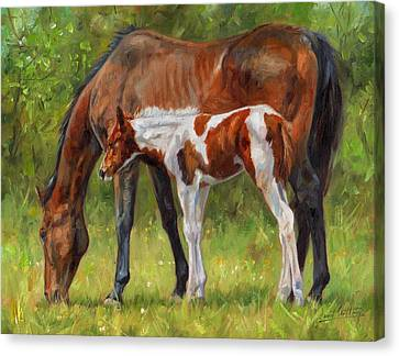 Horse And Foal Canvas Print by David Stribbling