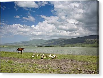 Horse And Geese By Lake Aktas Canvas Print by Bob Gibbons