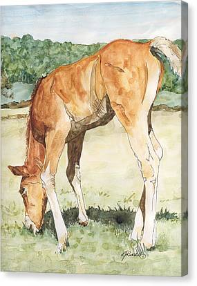 Horse Art Long-legged Colt Painting Equine Watercolor Ink Foal Rural Field Artist K. Joann Russell  Canvas Print