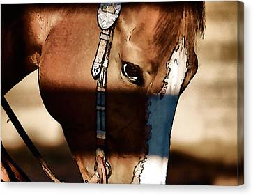 Canvas Print featuring the photograph Horse At Work by Pamela Blizzard