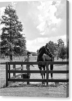 Horse Bathing At City Park In Black And White Canvas Print