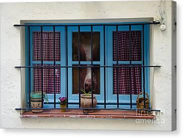 Horse Behind The Window Canvas Print by Victoria Herrera
