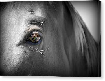 Nature Canvas Print - Horse Close Up Series 3 Of 3 by May Photography