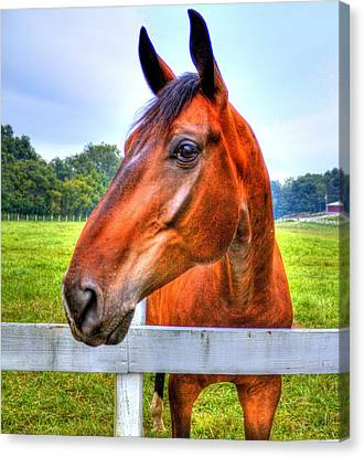 Horse Closeup Canvas Print