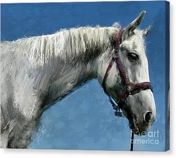 Horse  Canvas Print by Daliana Pacuraru
