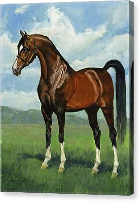 Khemosabi Champion Horse Canvas Print