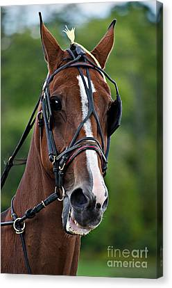 Pleasure Driving Canvas Print - Horse Drawn Pleasure by Dianne  Paul