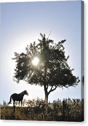 Canvas Print featuring the photograph Horse Dreaming Under Tree by Michael Dohnalek