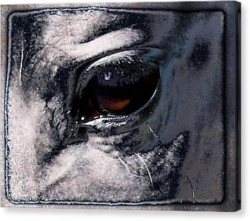 Horse Eye Canvas Print by Gun Legler