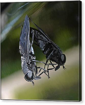 Canvas Print featuring the photograph Horse Fly by DigiArt Diaries by Vicky B Fuller