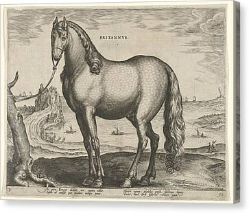 Horse From Brittany, Brittanus, Hieronymus Wierix Canvas Print by Hieronymus Wierix And Philips Galle