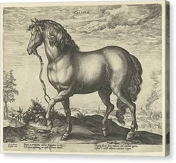 Running Horses Canvas Print - Horse From Calabria, Hendrick Goltzius, Philips Galle by Hendrick Goltzius And Philips Galle