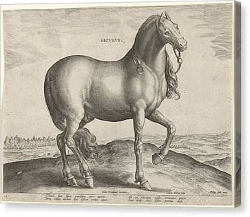Horse From Sicily Siculus, Hieronymus Wierix Canvas Print by Hieronymus Wierix And Philips Galle