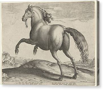 Horse From Spain Hispanus Alter, Hieronymus Wierix Canvas Print by Hieronymus Wierix And Philips Galle
