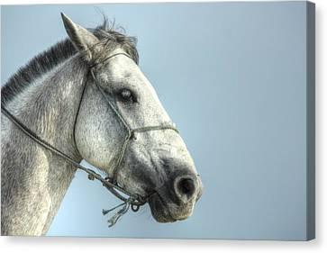 Canvas Print featuring the photograph Horse Head-shot by Eti Reid