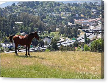 Horse Hill Mill Valley California 5d22663 Canvas Print by Wingsdomain Art and Photography