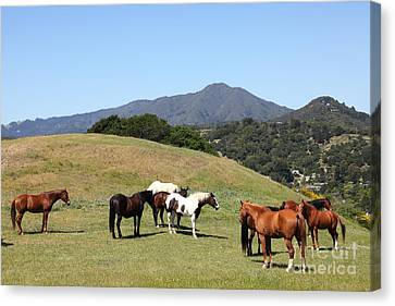 Horse Hill Mill Valley California 5d22672 Canvas Print by Wingsdomain Art and Photography