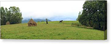 Romania Canvas Print - Horse In A Field, Bran, Brasov County by Panoramic Images