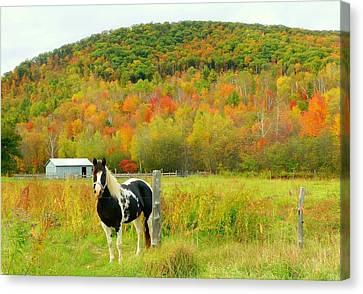 Horse In Autumn Field Canvas Print