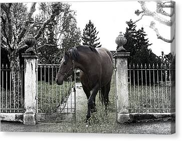 Horse In Europe Canvas Print