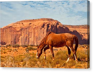 Horse In The Desert Canvas Print by Susan Schmitz