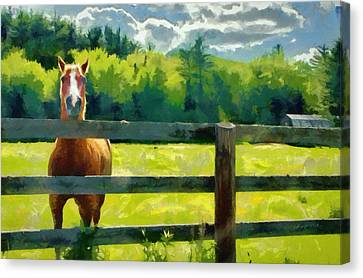 Horse In The Field Canvas Print by Jeff Kolker