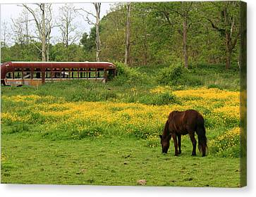 Horse In The Meadow Near Weetamoo Canvas Print
