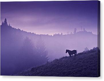Horse In The Mist Canvas Print by Yuri Santin