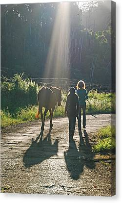 Horse In The Spotlight Canvas Print