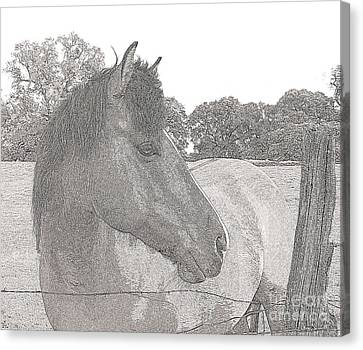 Canvas Print featuring the photograph Horse by Irina Hays