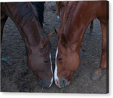 Horse Love Canvas Print by Cherie Haines