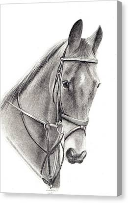 Horse Canvas Print by Mary Mayes