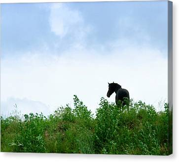 Canvas Print featuring the photograph Horse On The Hill by Joan Davis