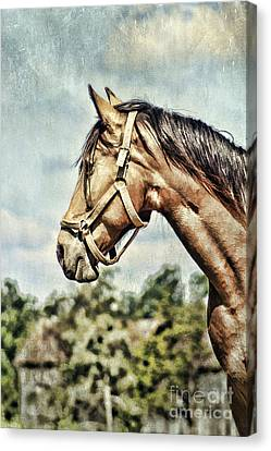 Horse Profile Canvas Print by Darren Fisher
