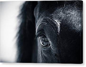 Horse Reflection Canvas Print